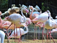 08-36 Parque das Aves (800x600)
