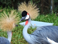 08-37 Parque das Aves (800x600)