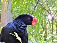 08-38 Parque das Aves (800x600)