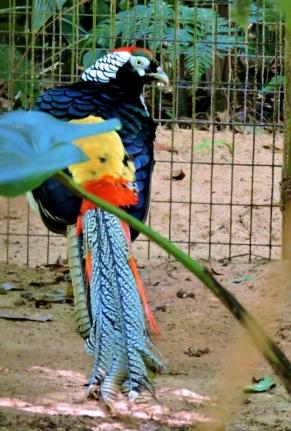 08-41 Parque das Aves (539x800)