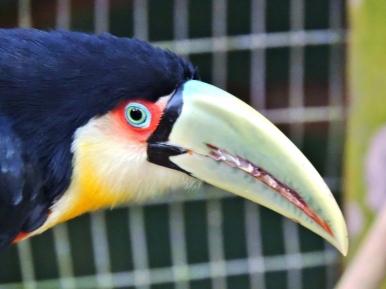 08-44 Parque das Aves (800x600)