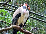 08-46 Parque das Aves (800x600)