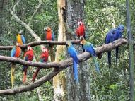 08-47 Parque das Aves (800x600)