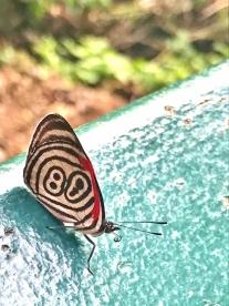08-51 Parque das Aves (600x800)
