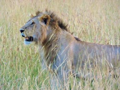 05-01 lions (1024x768)