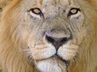 05-06 lions (1024x768)
