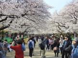 01-02 Tokyo - Sakura-Cherry Blossom Festival (1024x768)