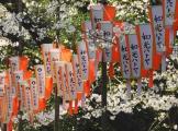 01-07 Tokyo - Sakura-Cherry Blossom Festival (1024x759)