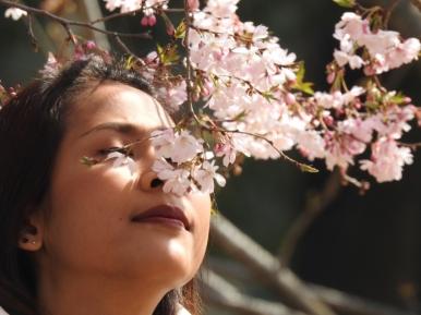 01-08 Tokyo - Sakura-Cherry Blossom Festival (1024x768)