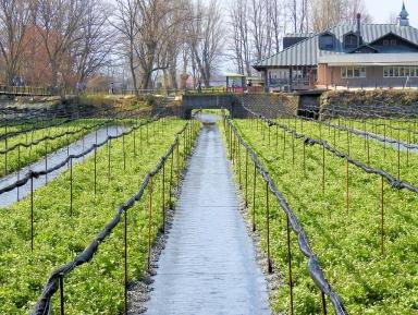 03-01 Nagano - wasabi farm (1024x772)