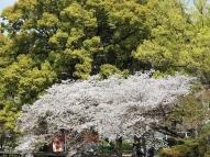 03-26 Osaka (1024x768)