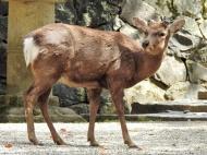 03-35 Nara Park (1024x768)