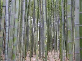 04-16 Kyoto - Sagano Bamboo Grove (1024x768)