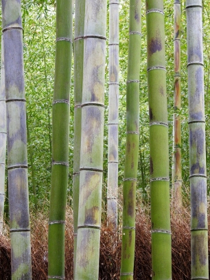 04-17 Kyoto - Sagano Bamboo Grove (768x1024)