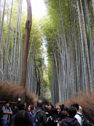 04-18 Kyoto - Sagano Bamboo Grove (768x1024)