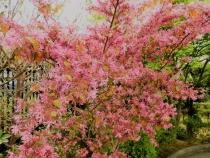 05-39 Nagasaki - Glover Garden (1024x768)