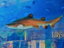 01-03 Dubai Mall aquarium (1024x768)